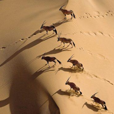 Namibia golf , golf namibia