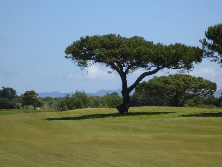 Ventura County Golf | Olivas Links