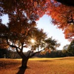 Abiko Golf Club - 我孫子ゴルフ倶楽部