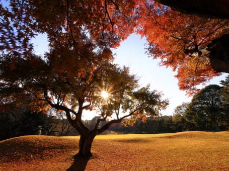 Abiko Golf Club – 我孫子ゴルフ倶楽部