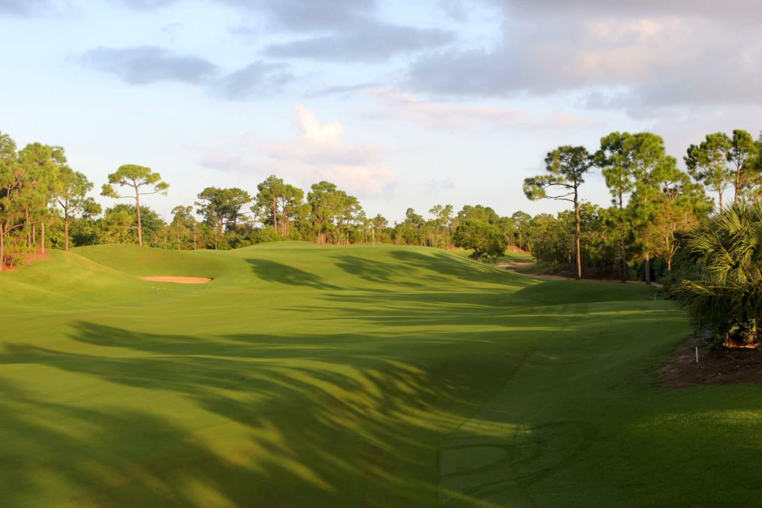 Loblolly Golf Course - Loblolly Pines